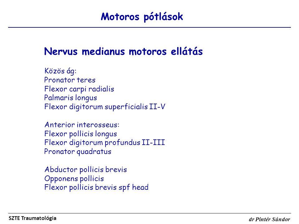 Nervus medianus motoros ellátás