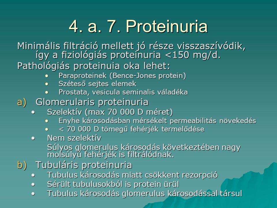 4. a. 7. Proteinuria Minimális filtráció mellett jó része visszaszívódik, így a fiziológiás proteinuria <150 mg/d.