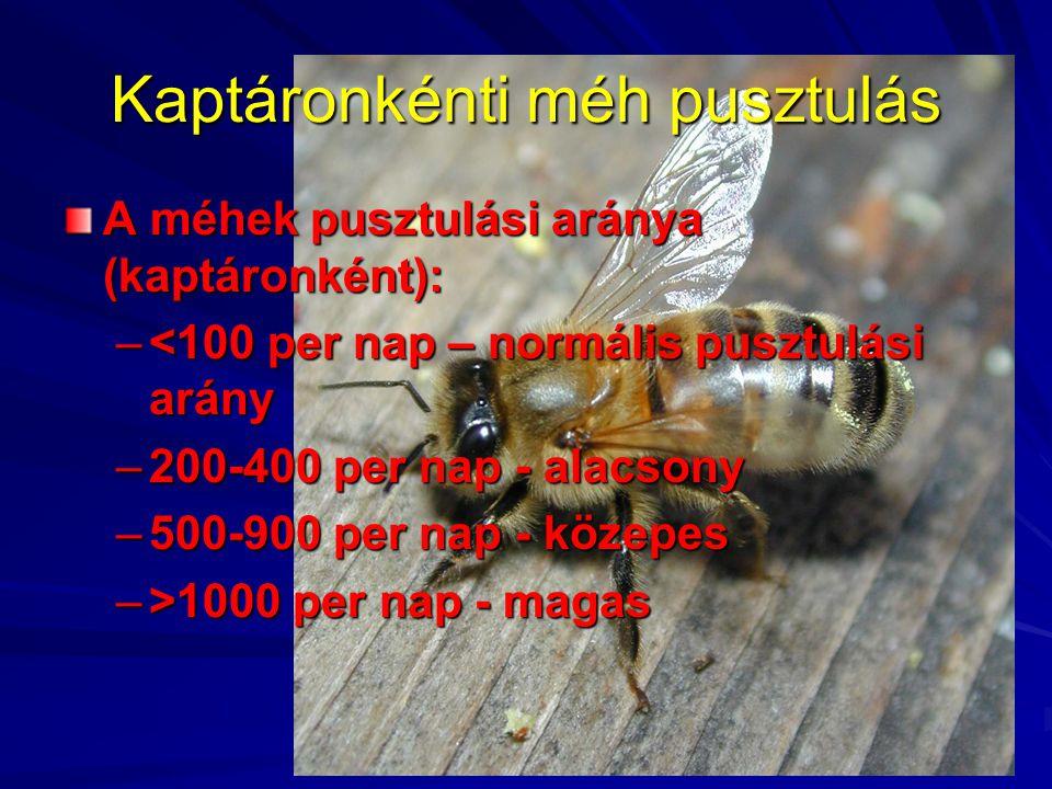 Kaptáronkénti méh pusztulás