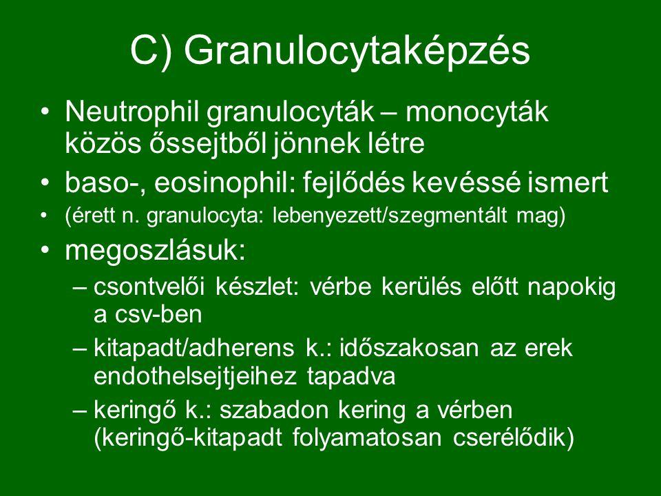 C) Granulocytaképzés Neutrophil granulocyták – monocyták közös őssejtből jönnek létre. baso-, eosinophil: fejlődés kevéssé ismert.