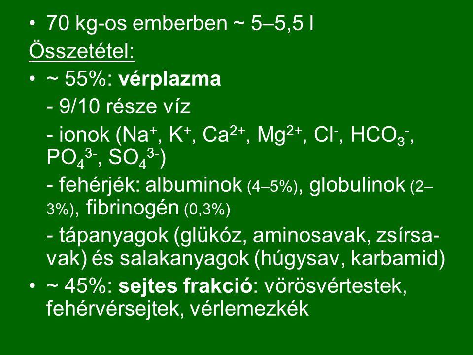 70 kg-os emberben ~ 5–5,5 l Összetétel: ~ 55%: vérplazma. - 9/10 része víz. - ionok (Na+, K+, Ca2+, Mg2+, Cl-, HCO3-, PO43-, SO43-)
