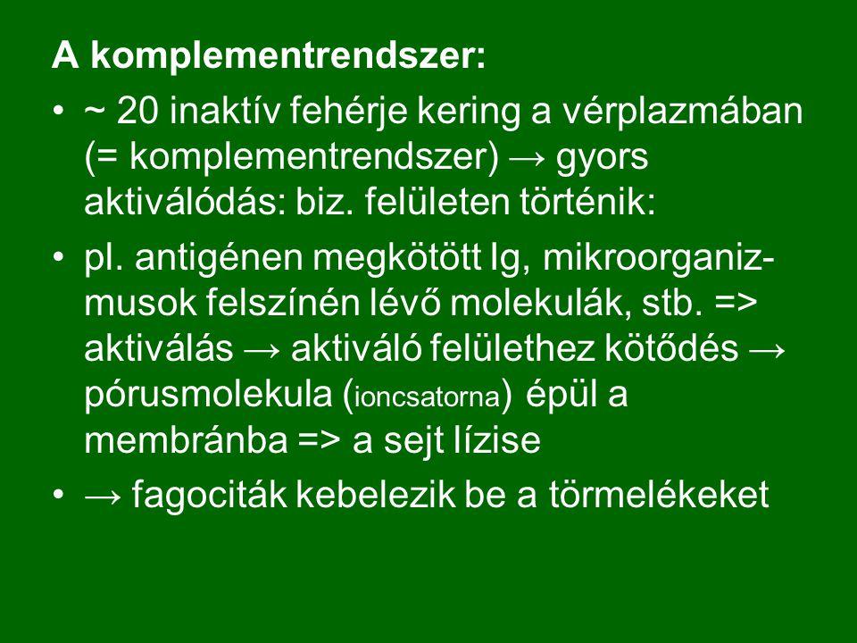 A komplementrendszer: