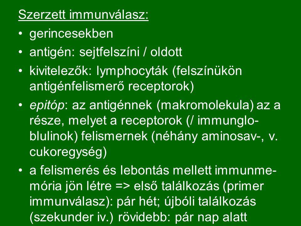Szerzett immunválasz: