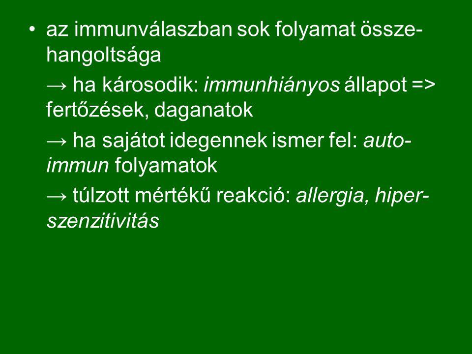 az immunválaszban sok folyamat össze-hangoltsága