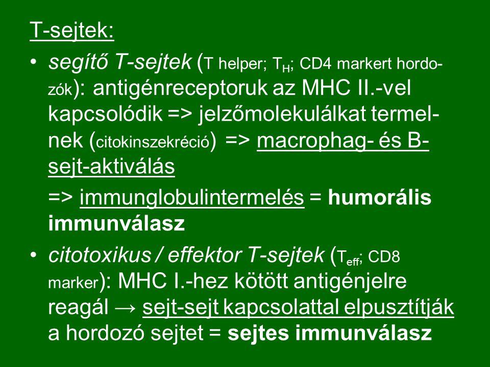 T-sejtek: