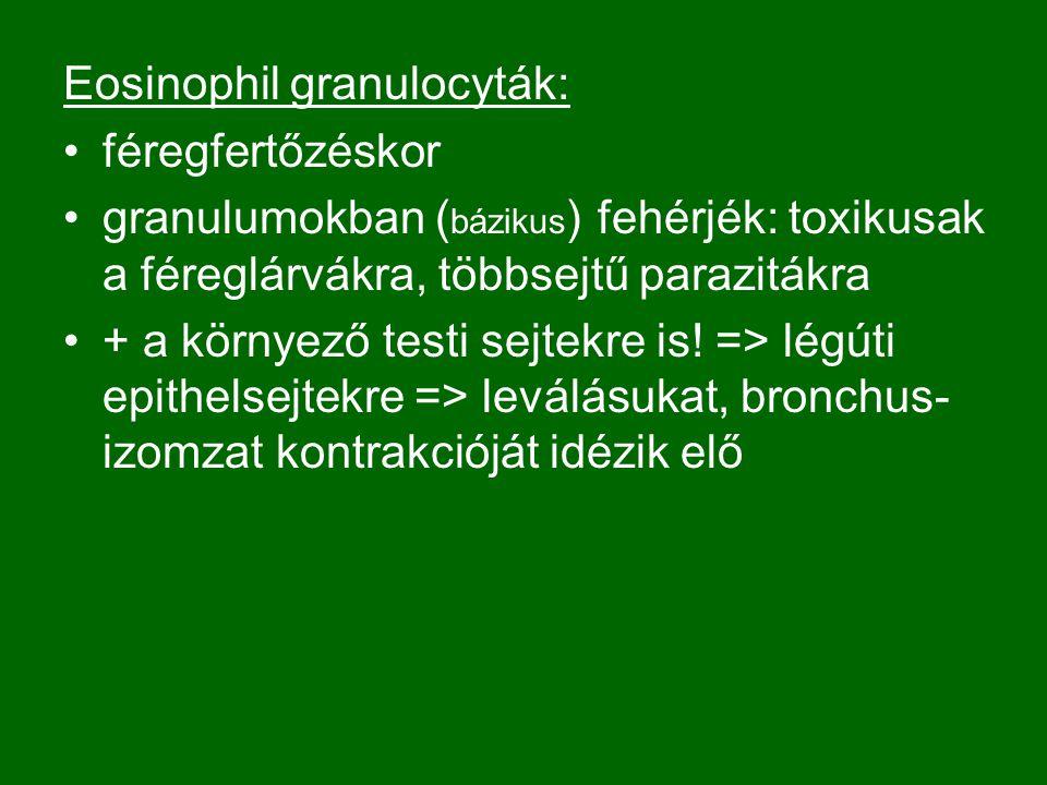 Eosinophil granulocyták: