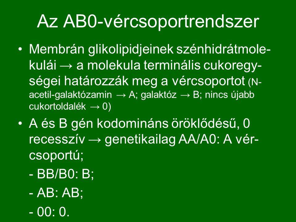 Az AB0-vércsoportrendszer