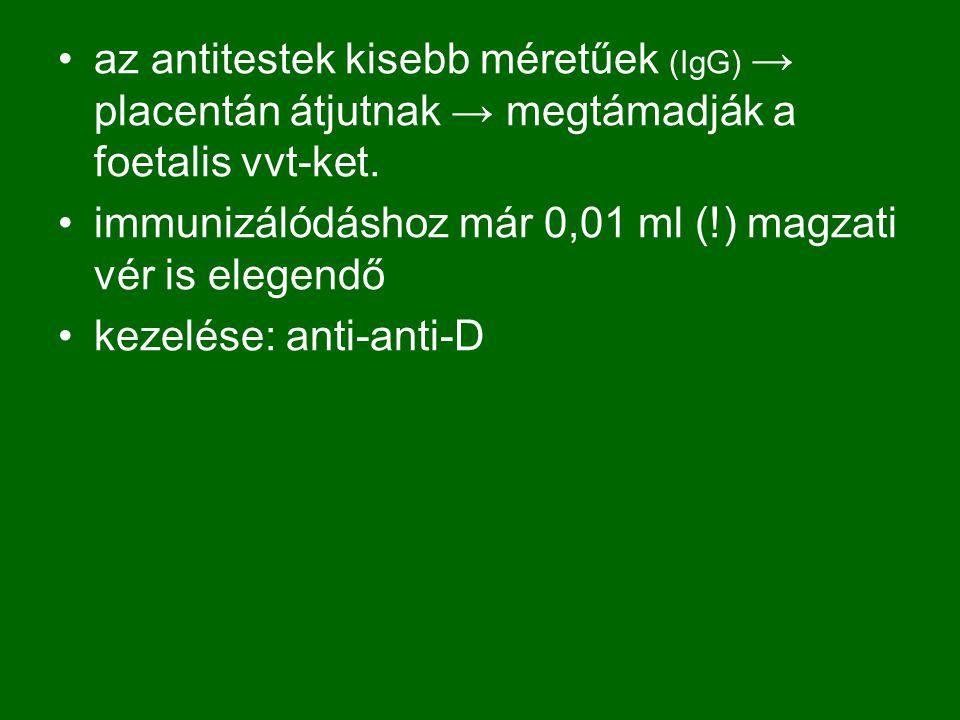 az antitestek kisebb méretűek (IgG) → placentán átjutnak → megtámadják a foetalis vvt-ket.