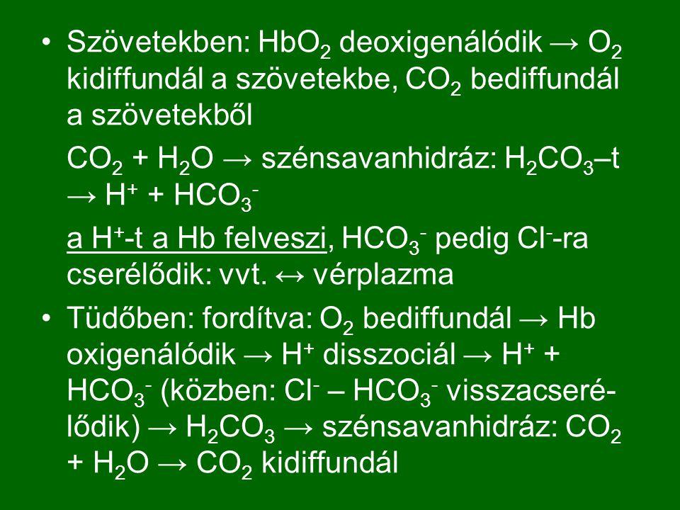 Szövetekben: HbO2 deoxigenálódik → O2 kidiffundál a szövetekbe, CO2 bediffundál a szövetekből