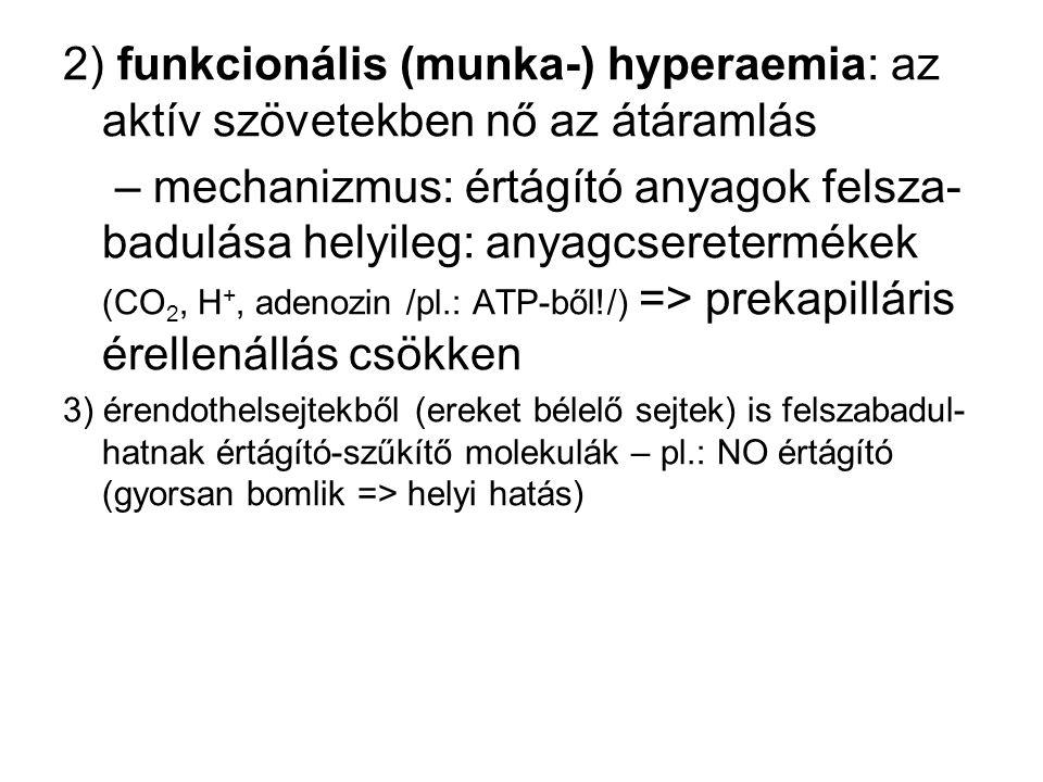 2) funkcionális (munka-) hyperaemia: az aktív szövetekben nő az átáramlás