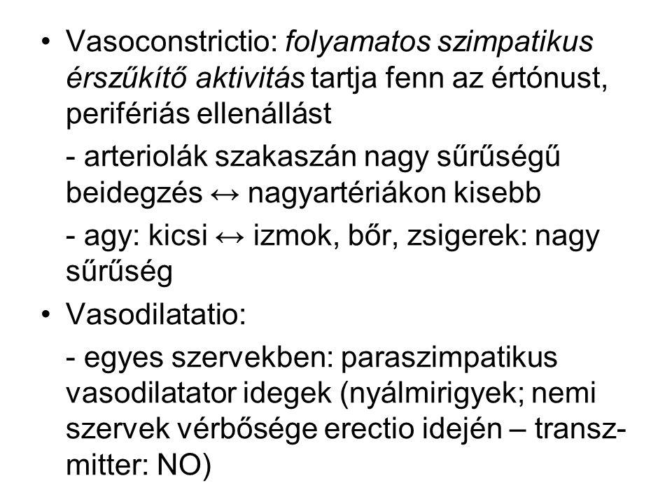 Vasoconstrictio: folyamatos szimpatikus érszűkítő aktivitás tartja fenn az értónust, perifériás ellenállást