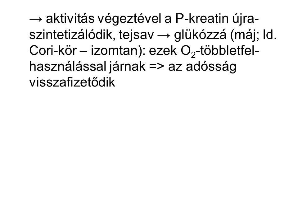 → aktivitás végeztével a P-kreatin újra-szintetizálódik, tejsav → glükózzá (máj; ld.
