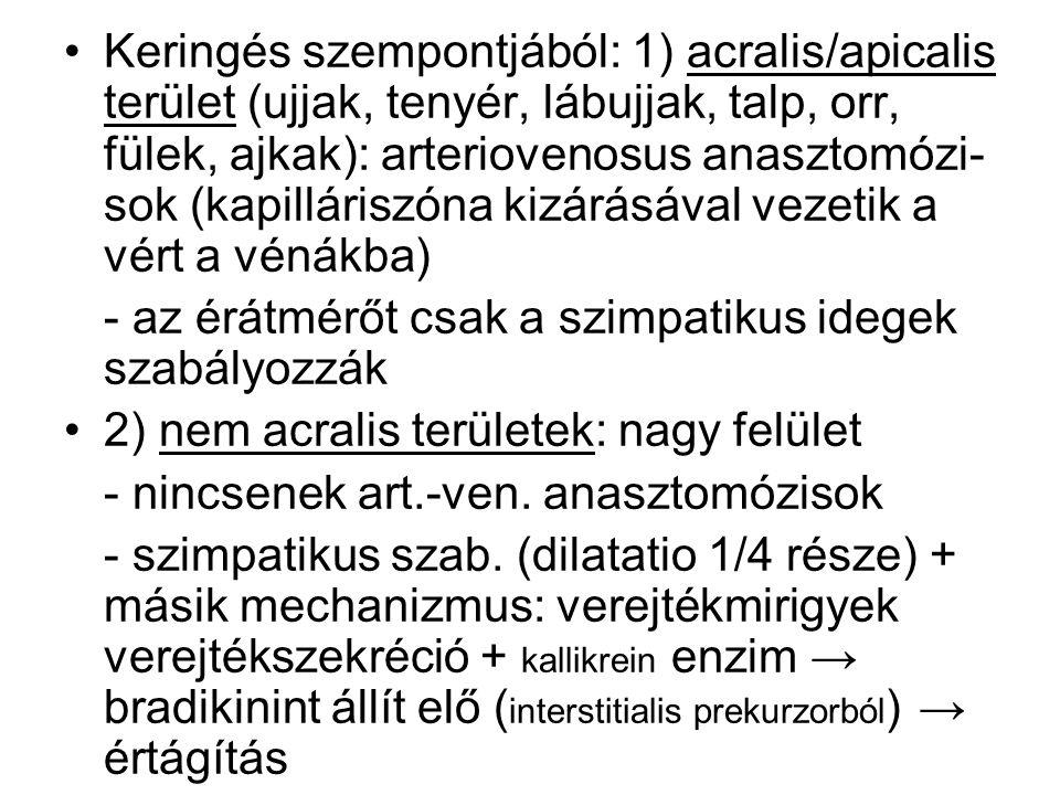 Keringés szempontjából: 1) acralis/apicalis terület (ujjak, tenyér, lábujjak, talp, orr, fülek, ajkak): arteriovenosus anasztomózi-sok (kapilláriszóna kizárásával vezetik a vért a vénákba)