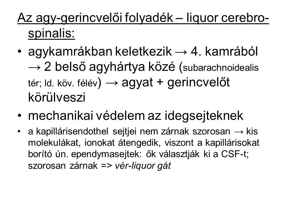 Az agy-gerincvelői folyadék – liquor cerebro-spinalis: