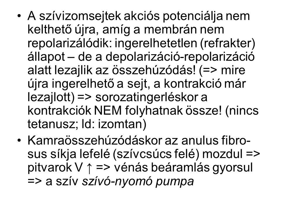 A szívizomsejtek akciós potenciálja nem kelthető újra, amíg a membrán nem repolarizálódik: ingerelhetetlen (refrakter) állapot – de a depolarizáció-repolarizáció alatt lezajlik az összehúzódás! (=> mire újra ingerelhető a sejt, a kontrakció már lezajlott) => sorozatingerléskor a kontrakciók NEM folyhatnak össze! (nincs tetanusz; ld: izomtan)