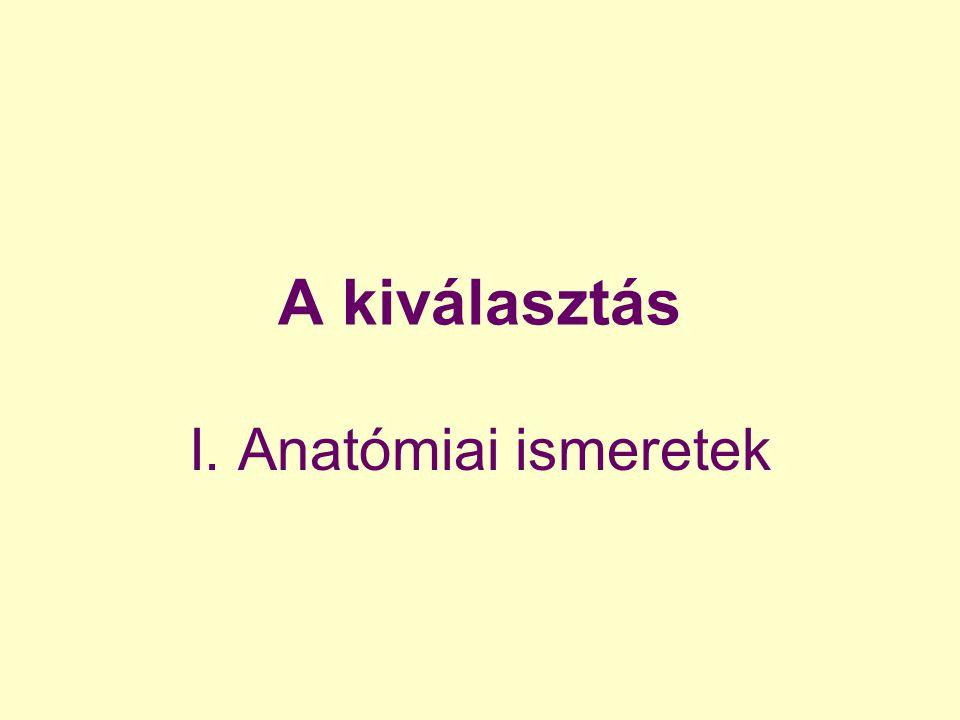 A kiválasztás I. Anatómiai ismeretek