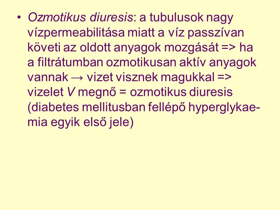 Ozmotikus diuresis: a tubulusok nagy vízpermeabilitása miatt a víz passzívan követi az oldott anyagok mozgását => ha a filtrátumban ozmotikusan aktív anyagok vannak → vizet visznek magukkal => vizelet V megnő = ozmotikus diuresis (diabetes mellitusban fellépő hyperglykae-mia egyik első jele)