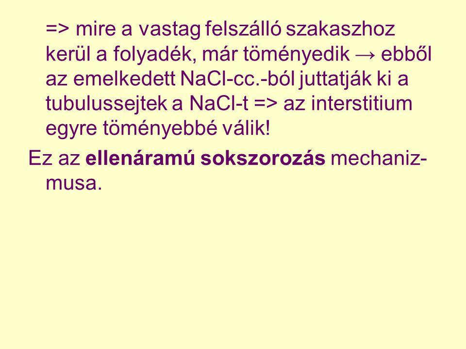 => mire a vastag felszálló szakaszhoz kerül a folyadék, már töményedik → ebből az emelkedett NaCl-cc.-ból juttatják ki a tubulussejtek a NaCl-t => az interstitium egyre töményebbé válik!