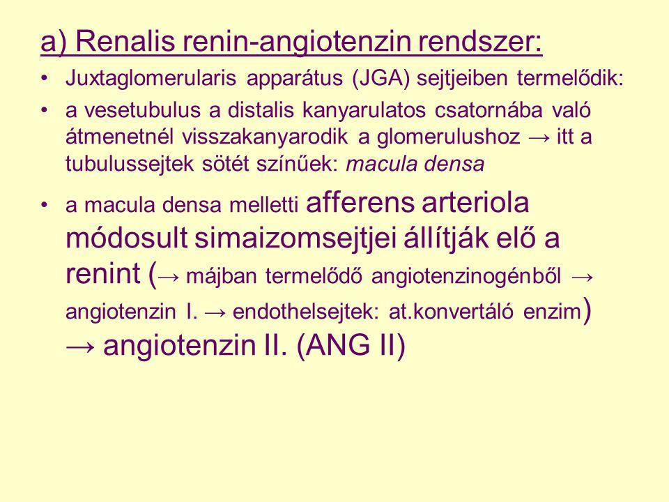 a) Renalis renin-angiotenzin rendszer: