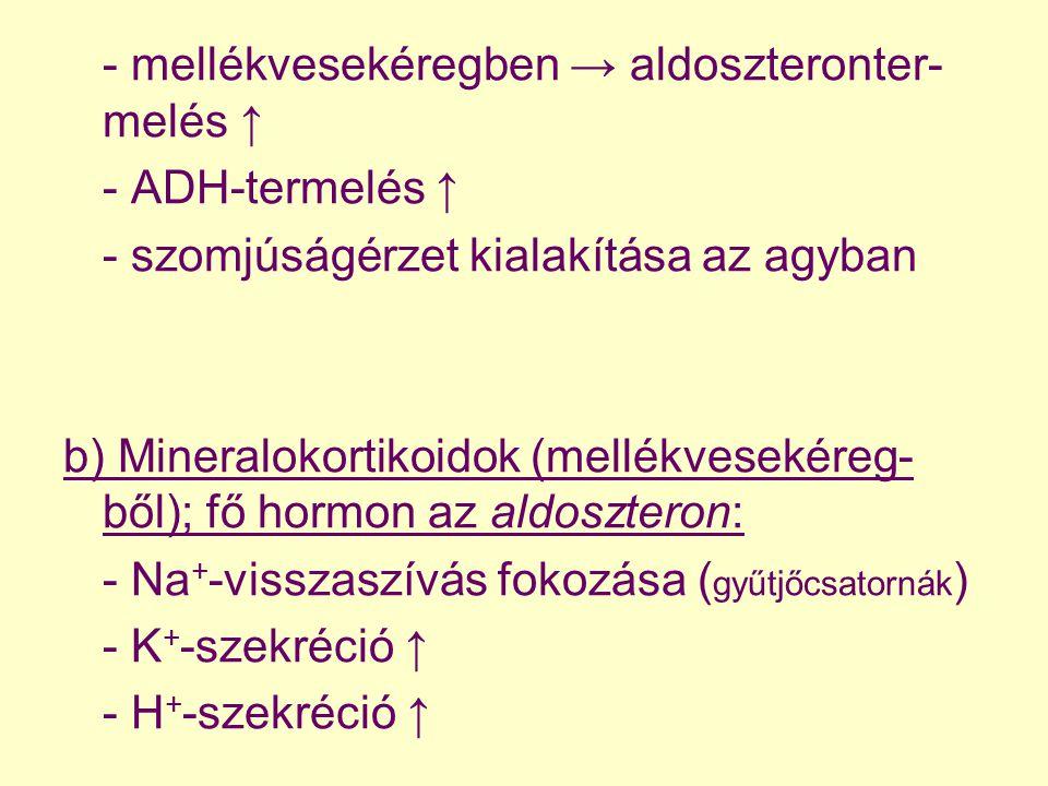 - mellékvesekéregben → aldoszteronter-me lés ↑