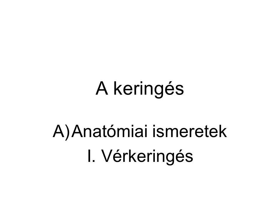 Anatómiai ismeretek I. Vérkeringés