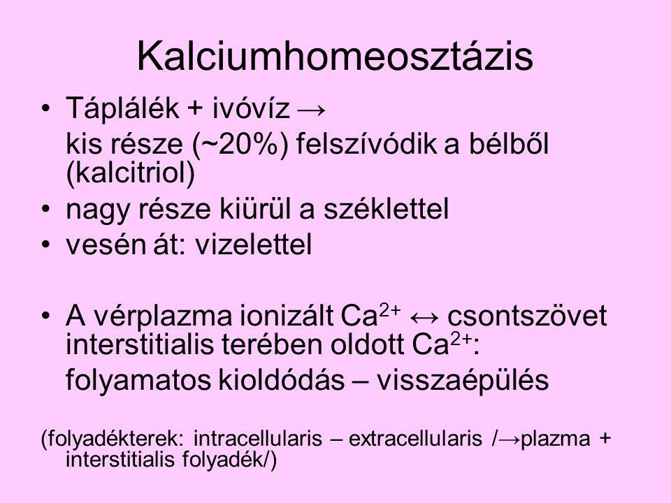 Kalciumhomeosztázis Táplálék + ivóvíz →