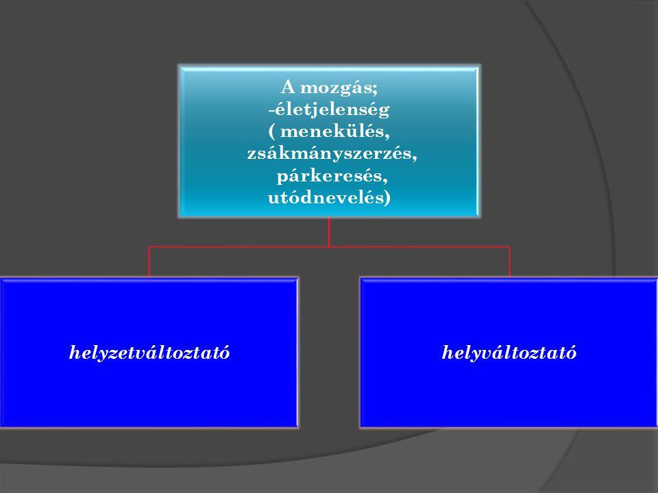 A mozgás; -életjelenség. ( menekülés, zsákmányszerzés, párkeresés, utódnevelés) helyzetváltoztató.