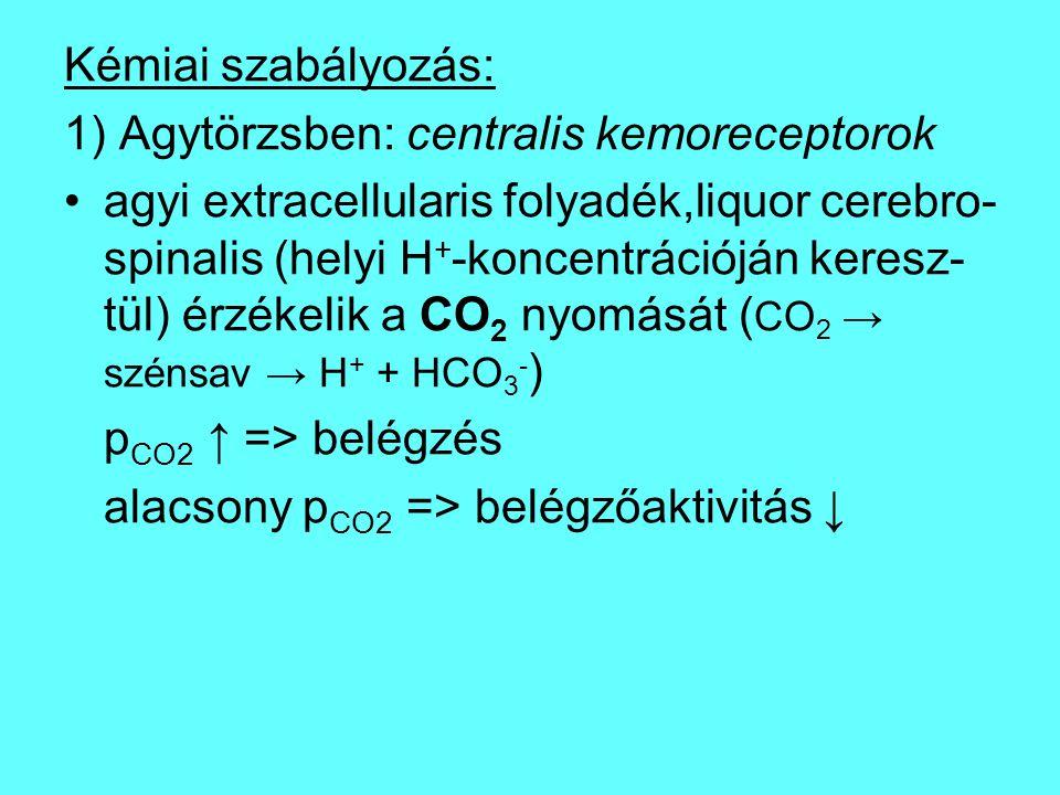 Kémiai szabályozás: 1) Agytörzsben: centralis kemoreceptorok.