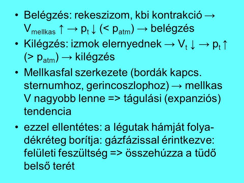 Belégzés: rekeszizom, kbi kontrakció → Vmellkas ↑ → pt ↓ (< patm) → belégzés