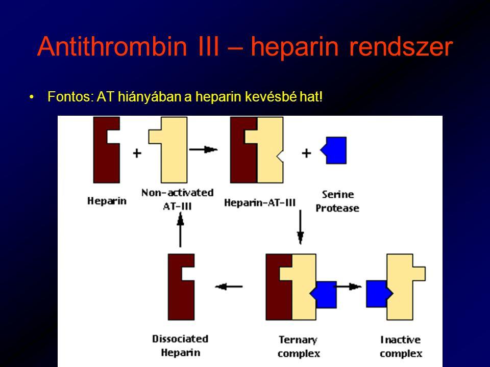 Antithrombin III – heparin rendszer