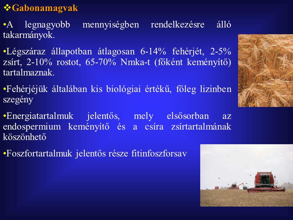 Gabonamagvak A legnagyobb mennyiségben rendelkezésre álló takarmányok.
