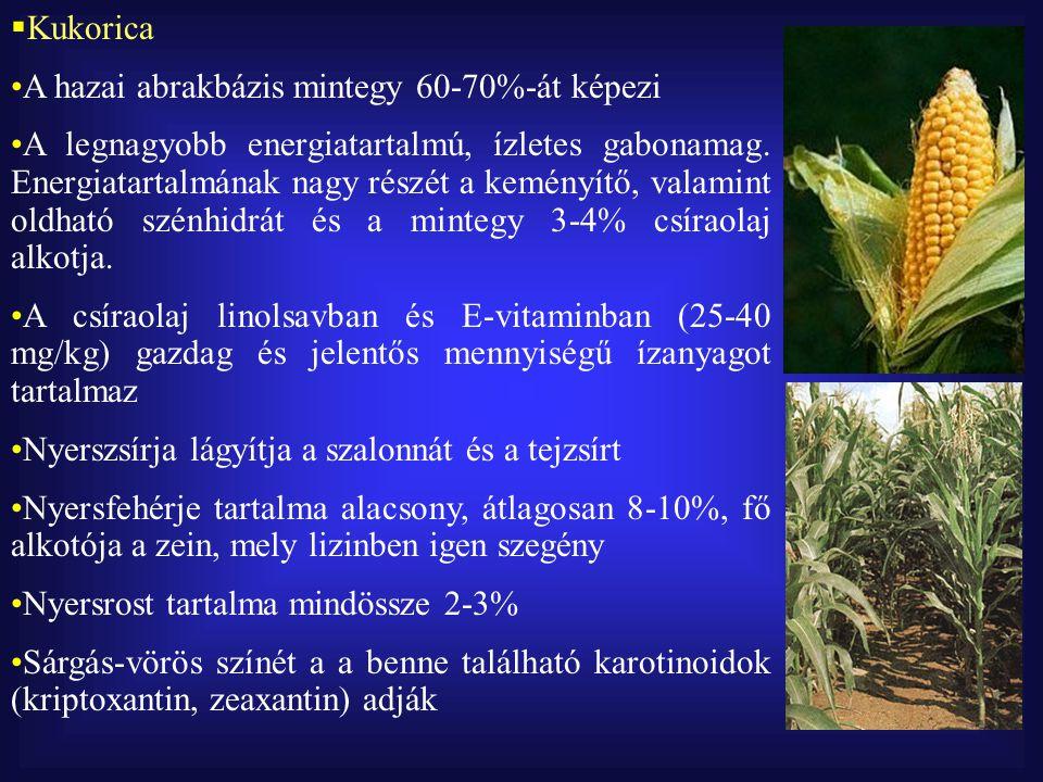 Kukorica A hazai abrakbázis mintegy 60-70%-át képezi.
