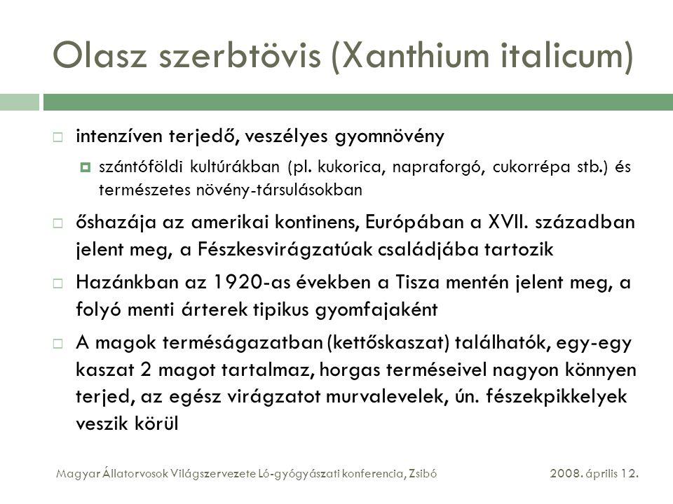 Olasz szerbtövis (Xanthium italicum)