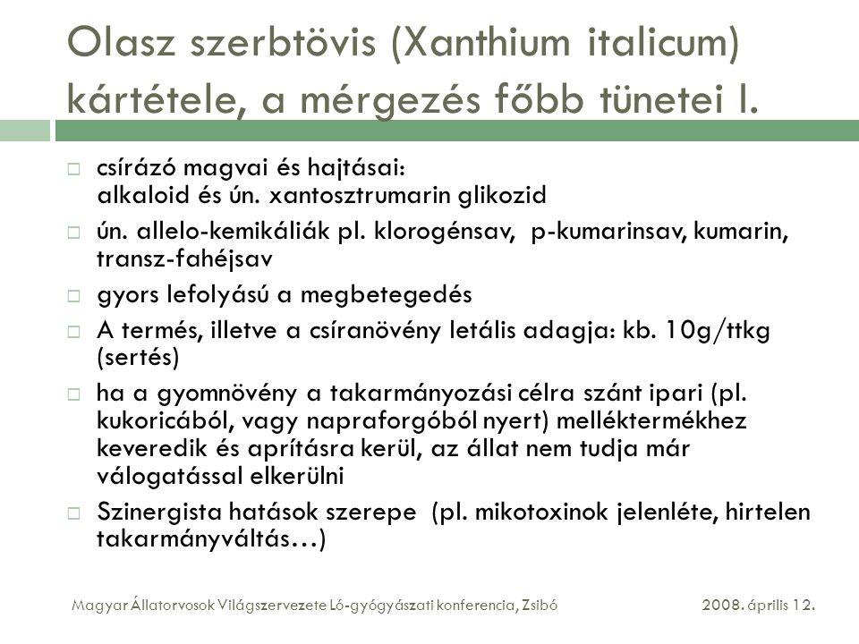 Olasz szerbtövis (Xanthium italicum) kártétele, a mérgezés főbb tünetei I.