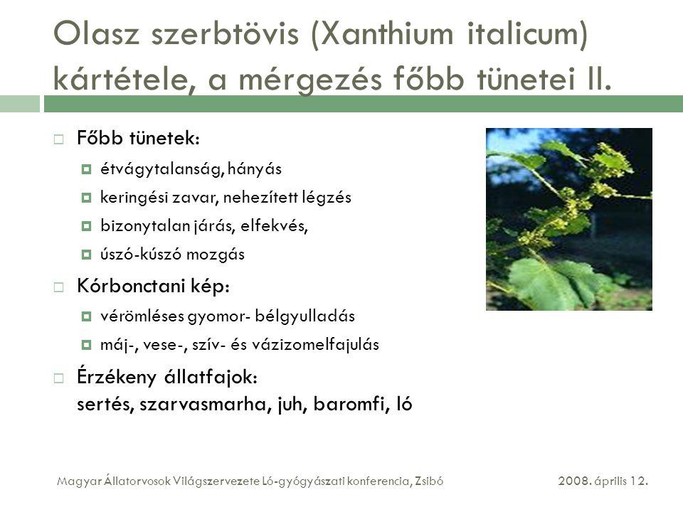 Olasz szerbtövis (Xanthium italicum) kártétele, a mérgezés főbb tünetei II.