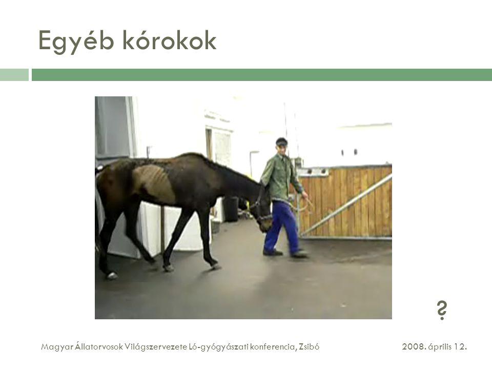 Egyéb kórokok . Magyar Állatorvosok Világszervezete Ló-gyógyászati konferencia, Zsibó.