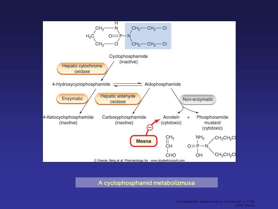 A cyclophosphamid metabolizmusa