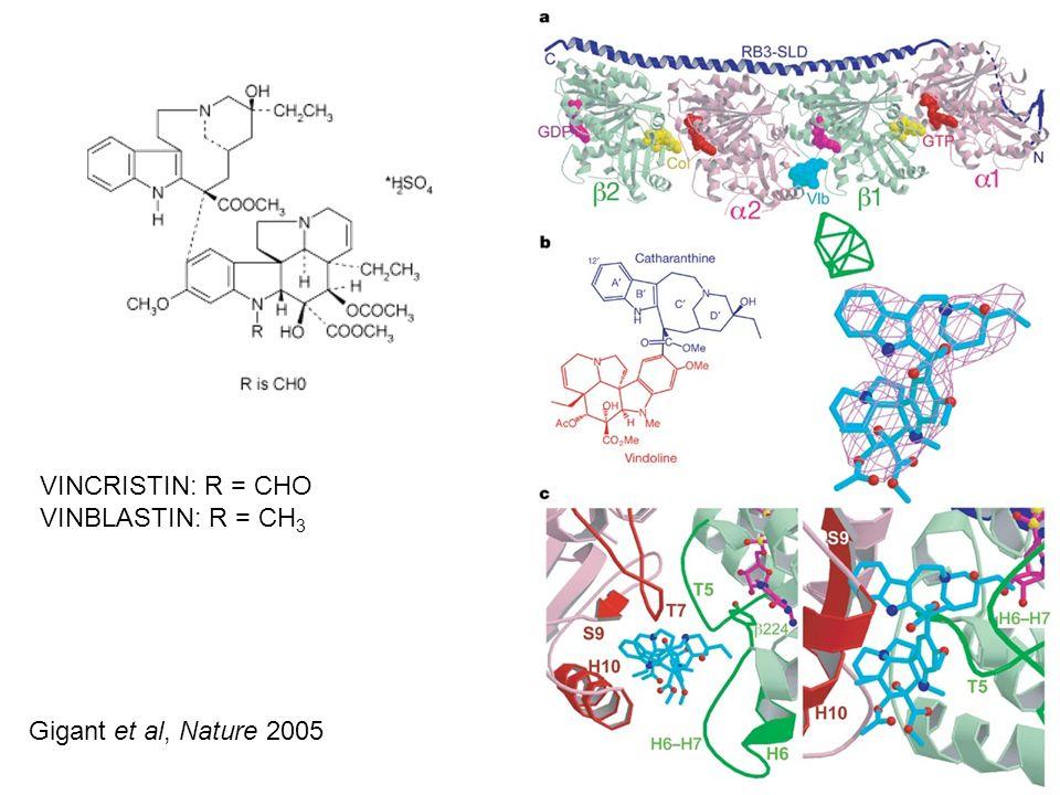 VINCRISTIN: R = CHO VINBLASTIN: R = CH3 Gigant et al, Nature 2005