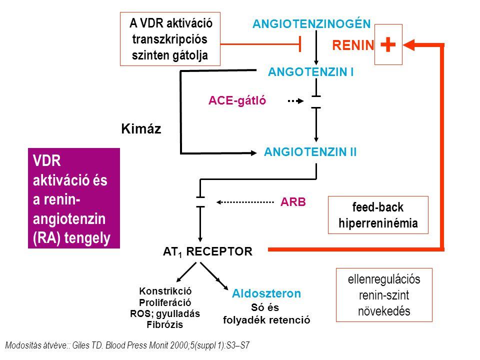 + VDR aktiváció és a renin-angiotenzin (RA) tengely