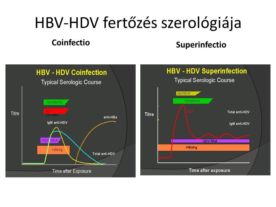 HBV-HDV fertőzés szerológiája