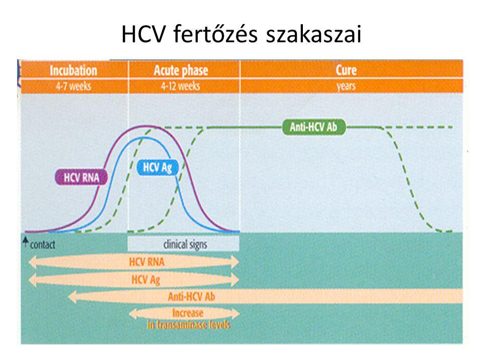 HCV fertőzés szakaszai