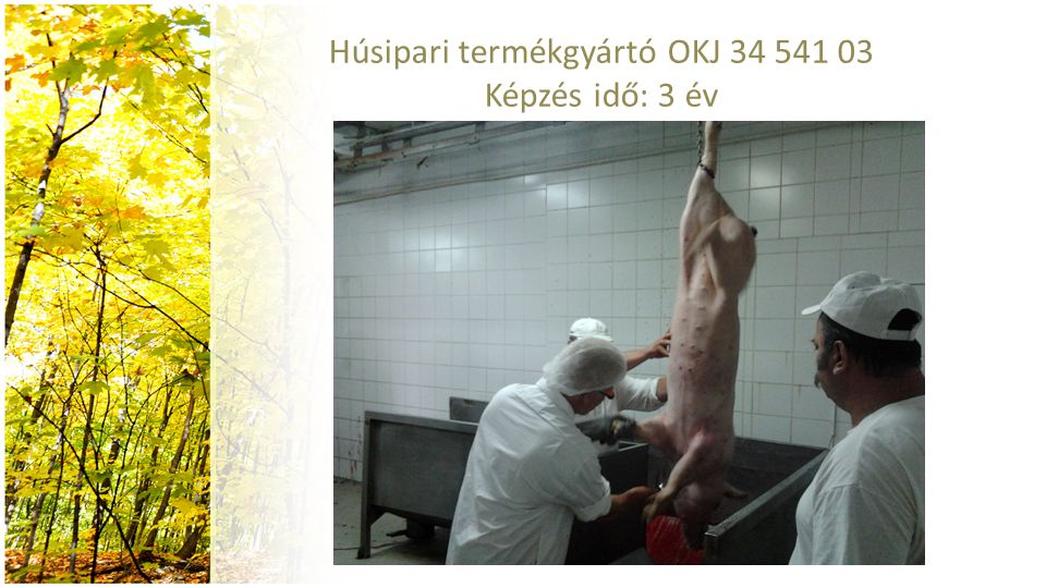 Húsipari termékgyártó OKJ 34 541 03 Képzés idő: 3 év
