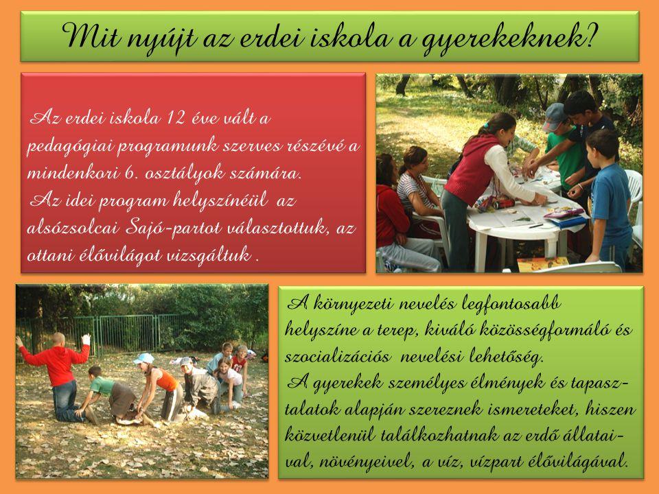 Mit nyújt az erdei iskola a gyerekeknek
