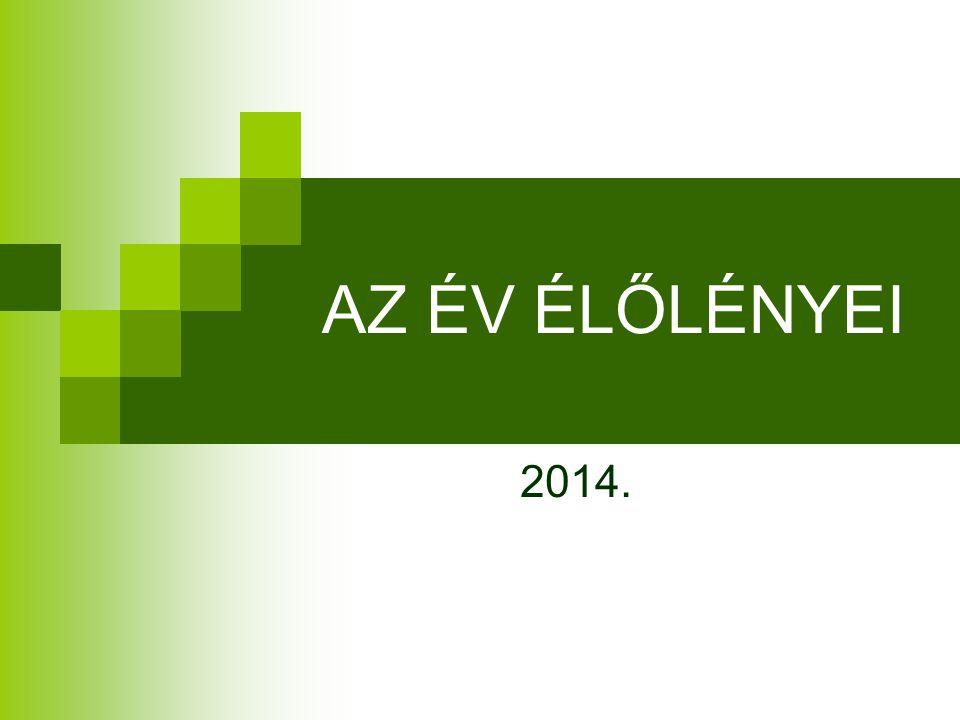 AZ ÉV ÉLŐLÉNYEI 2014.