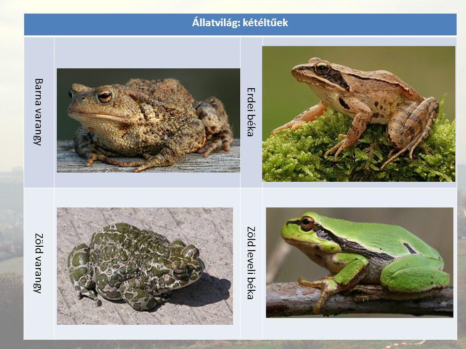 Állatvilág: kétéltűek