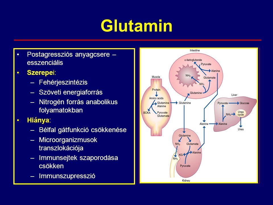 Glutamin Postagressziós anyagcsere – esszenciális Szerepei: