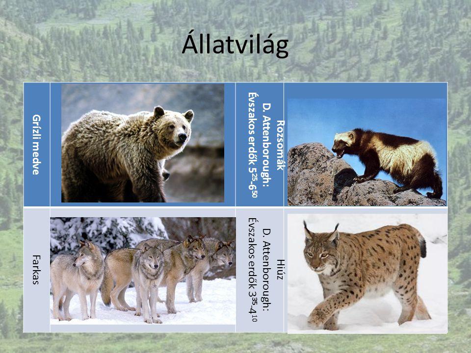 D. Attenborough: Évszakos erdők 525-650