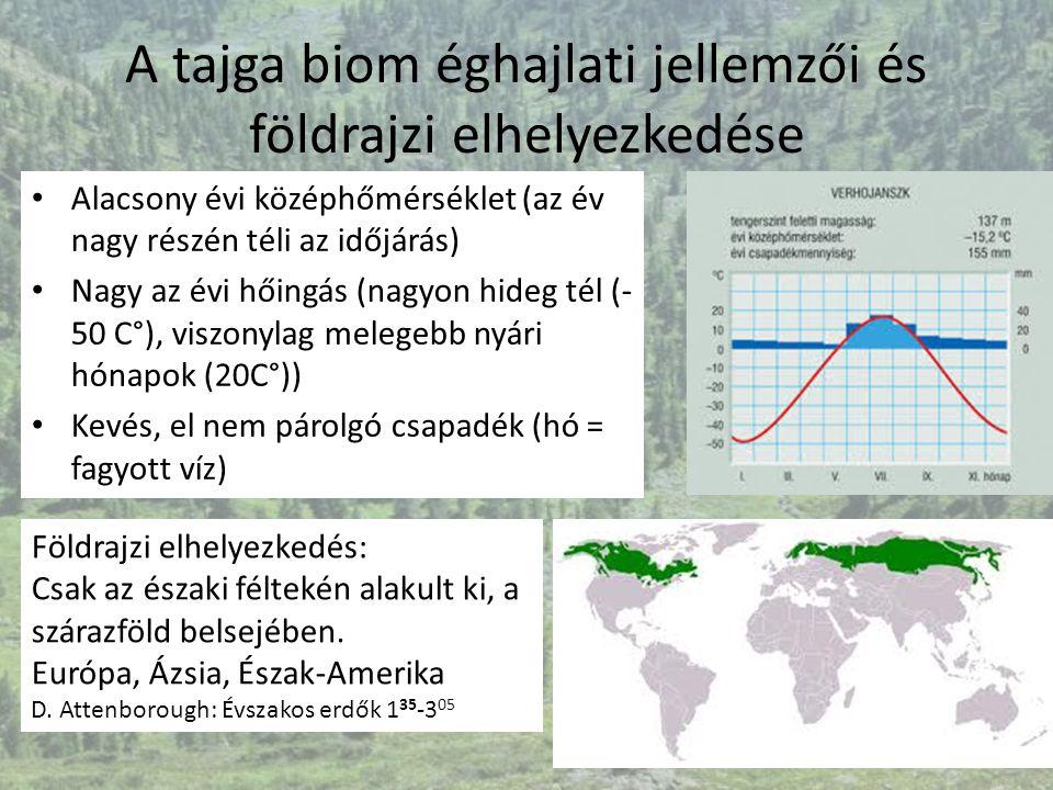 A tajga biom éghajlati jellemzői és földrajzi elhelyezkedése