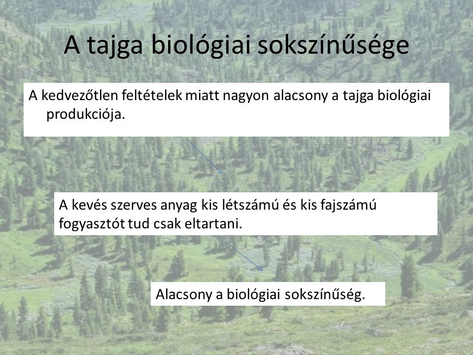 A tajga biológiai sokszínűsége
