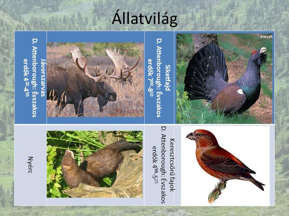 Állatvilág D. Attenborough: Évszakos erdők 420-455 Jávorszarvas